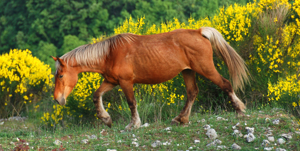 cavallo-sentieri-marche